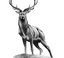 All Muscle - Red Deer Stag by Patricia Howitt