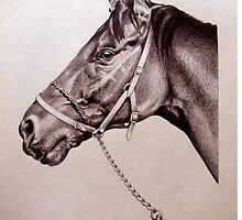 Sir Alfred - Racehorse by Patricia Howitt