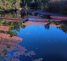Wonga Wetlands by John Vandeven