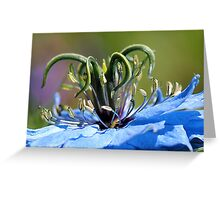 Love in the mist II Greeting Card
