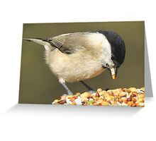 willow tit I'm sure I can manage one more! Greeting Card