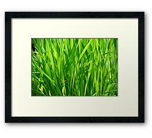 grass closeup Framed Print