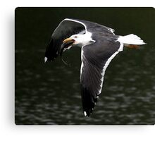 The Great Black Backed Gull Canvas Print