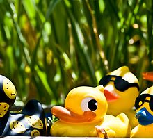 Duck days by Nala