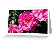 Rose Bush Greeting Card