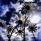 reaching for the sky ......... (colour) by SNAPPYDAVE