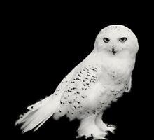 Snow Owl by Melissa Park