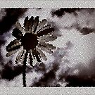 abstract daisy ... by SNAPPYDAVE