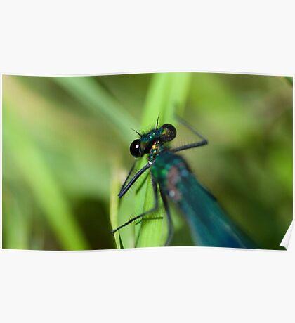 Bug eye Poster