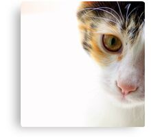 Because Kittens are Angels - I Canvas Print