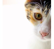 Because Kittens are Angels - I Photographic Print