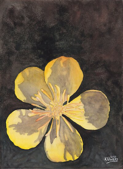 Yellow Wild Flower by Ken Powers