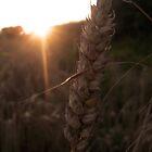 Barley by Laurenface