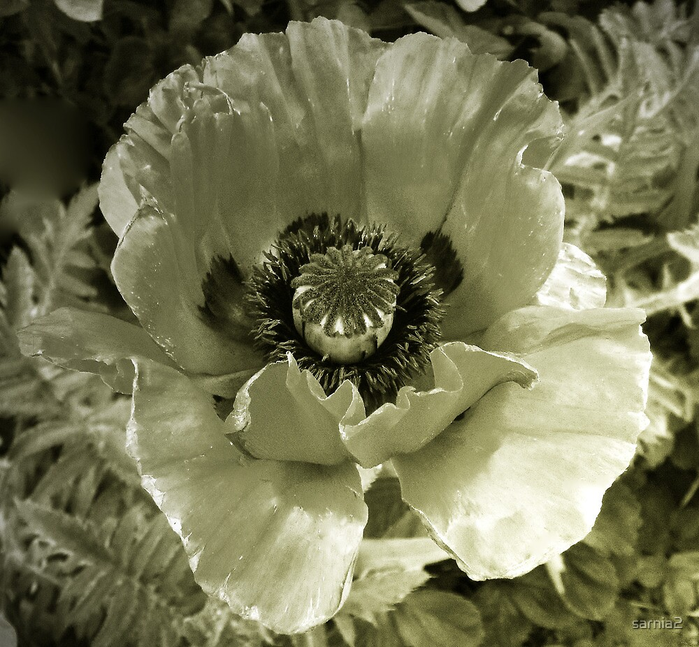 The Unconventional in Flora by sarnia2