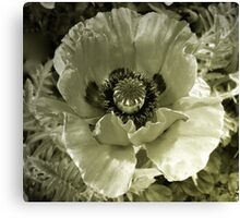 The Unconventional in Flora Canvas Print