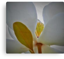 Heart of Magnolia Canvas Print