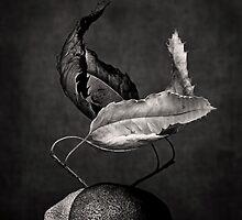 el tango by Dorit Fuhg