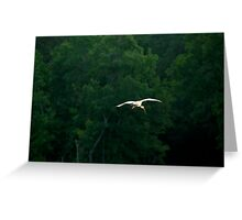 White Ibis flying by just before sunset Greeting Card