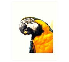 What's Up - Macaw parrot at birdworld Kuranda. Art Print