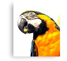 What's Up - Macaw parrot at birdworld Kuranda. Canvas Print