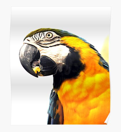 What's Up - Macaw parrot at birdworld Kuranda. Poster