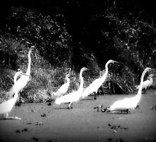 louisiana, black and white by leapdaybride