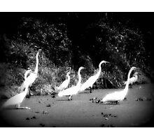 louisiana, black and white Photographic Print