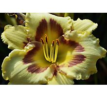Yellow Daylily Front Photographic Print