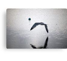 seagull flying over water Canvas Print