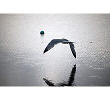 seagull flying over water Photographic Print