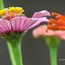 Flower Power by Ronee van Deemter