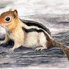 Golden Mantled Ground Squirrel by M Rogers