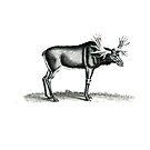 Moose by garts