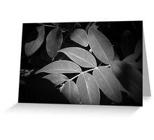 Spotlit Leaves B/W Greeting Card