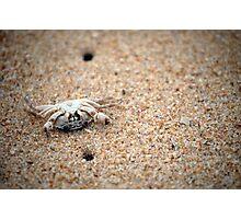 bottom up little crab Photographic Print