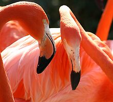 Pink Flamingo's look like they are Telling Secrets by Paulette1021