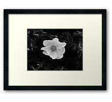 Black & White Beach Rose Framed Print