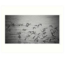 65 Birds...Give or Take Art Print