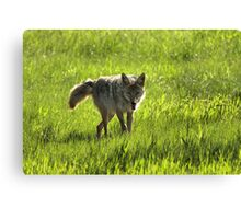 The hunt Canvas Print