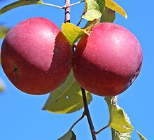 Perfect Pair of Apples by hummingbirds