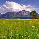 German Meadow II by Daidalos