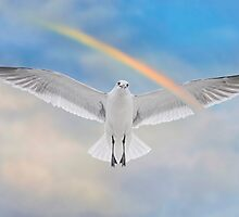 Soaring Seagull by Bonnie T.  Barry