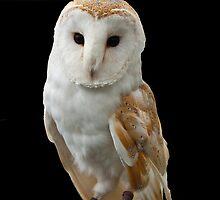 Portrait of a Barn Owl by John Thurgood