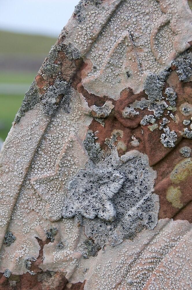 Lichen on a gravestone by Morag Anderson