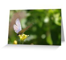 Dusty Purple Butterfly Greeting Card