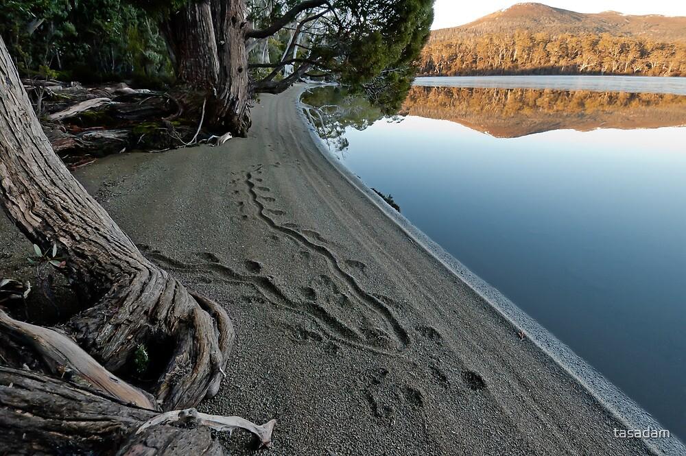 Wallaby tracks by tasadam