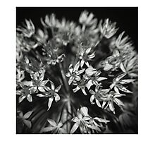 A firework in bloom Photographic Print