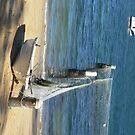 Manly Beach - Sydney Australia by Marius Brecher