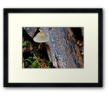 Furry Cap Framed Print