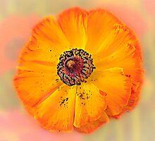pollination by doug hunwick